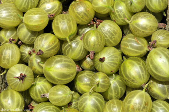 These are the gooseberries I used.  Mine were green but they also come in purple.